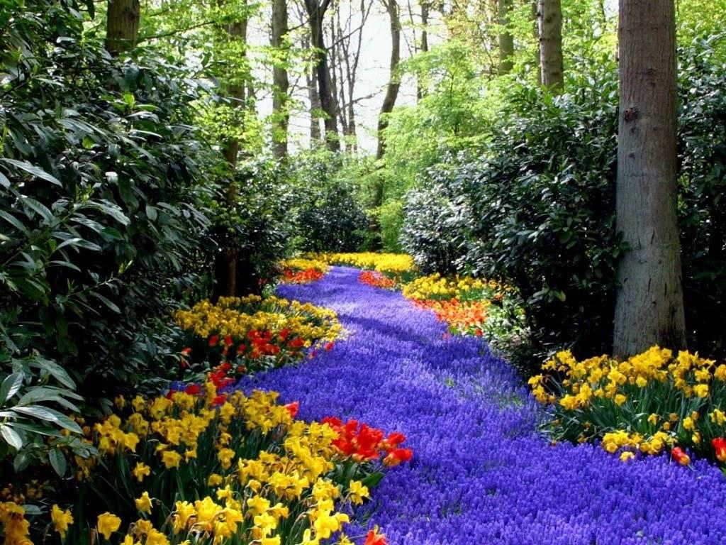 Dan inilah beberapa wallpaper panorama alam yang bisa anda download